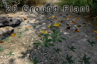20 plants ground flowers max