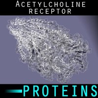 protein acetylcholine receptor 3d max