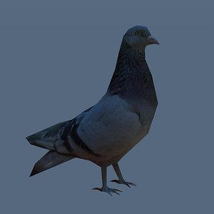 pigeon 3ds