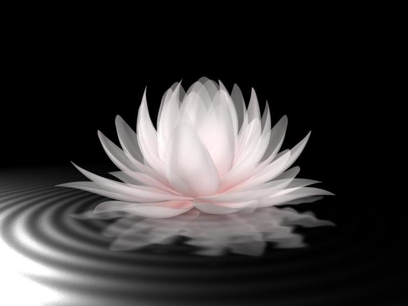 water d model, Beautiful flower