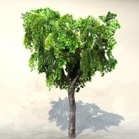 Tree_022.zip