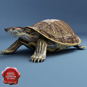 turtle red-eared slider static 3d max
