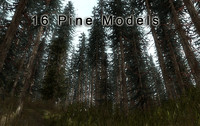 15 Pine Tree Vegetation