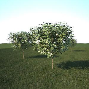 v-ray grass tree max