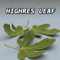 Leaf High Resolution