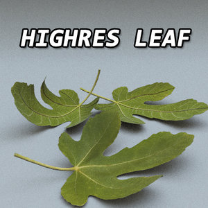 3d model of highres leaf res resolution