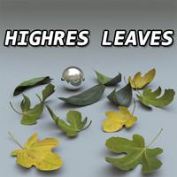 Leaves Set High Resolution