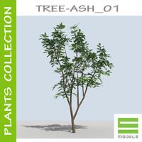 Tree - ASH_01