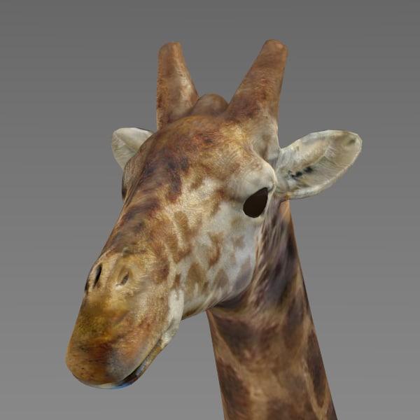 giraffe obj