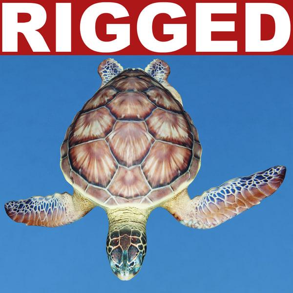 sea turtle chelonia mydas 3d model
