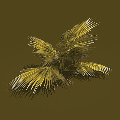 palm bush 3d model