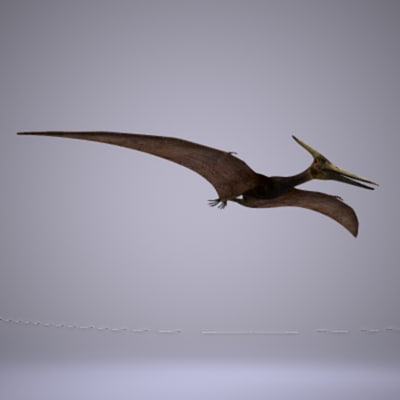 pteranodon fly animation 3d model