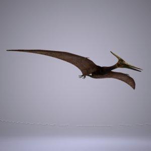 pteranodon fly animation 3d model