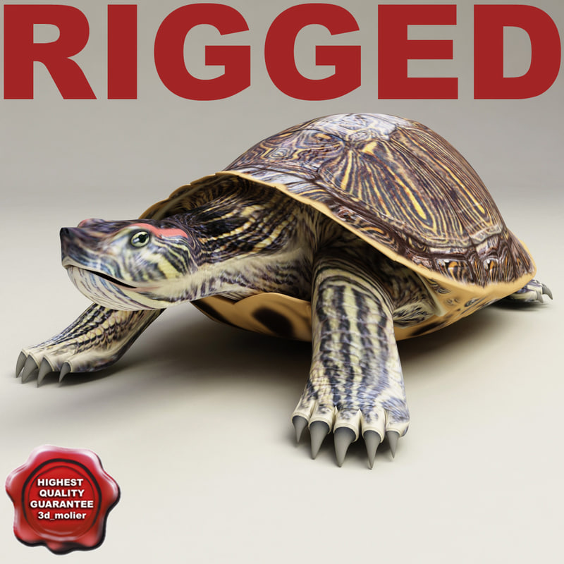 3d turtle red-eared slider rigged model