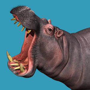 hippo 3d model