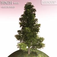 tree 008 spruce