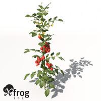 XfrogPlants Tomato