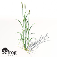xfrogplants wheat plant 3d max