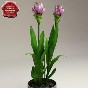 curcuma alismatifolia siam tulip 3d model