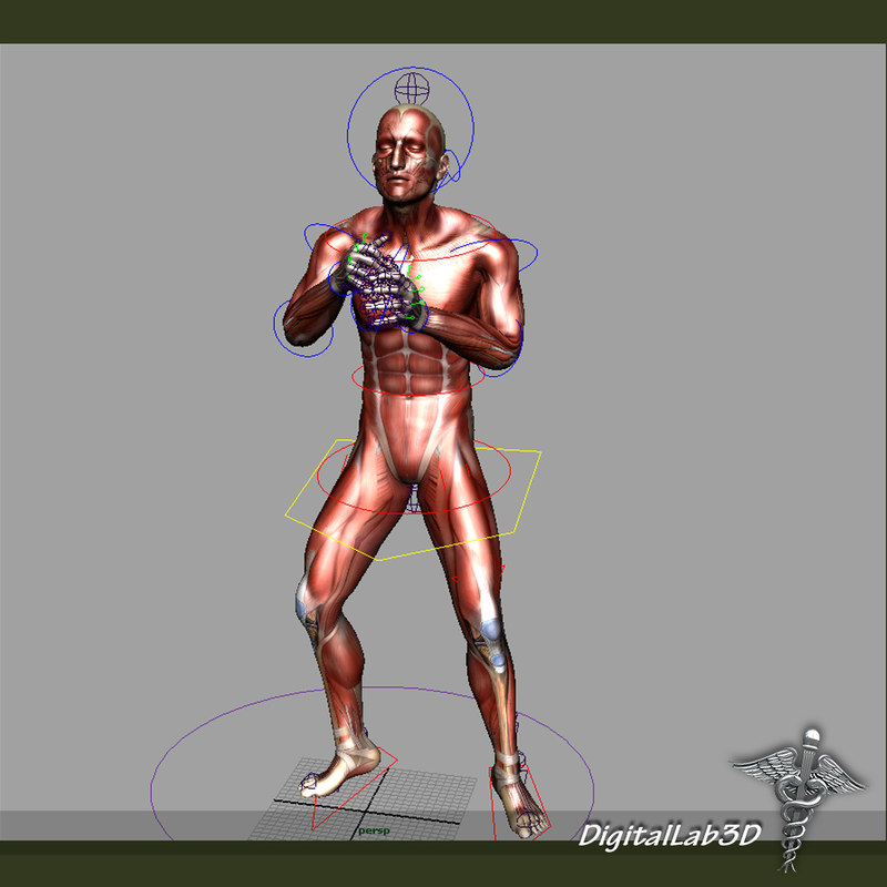 rigged human male muscular 3d model