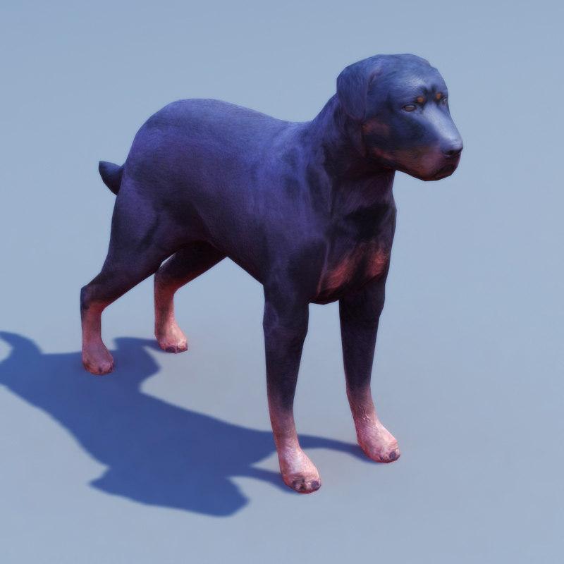 rottweiler dog 3d model