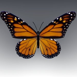butterfly wings fly 3d model
