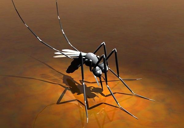 cartoon mosquito 3d model