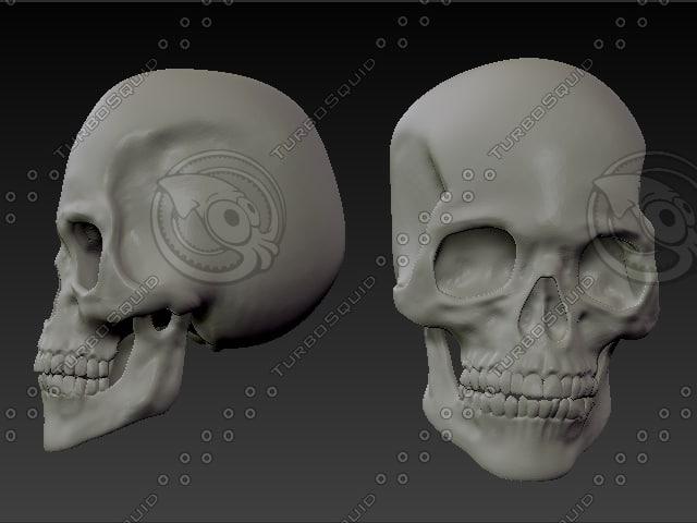 3dsmax human skull