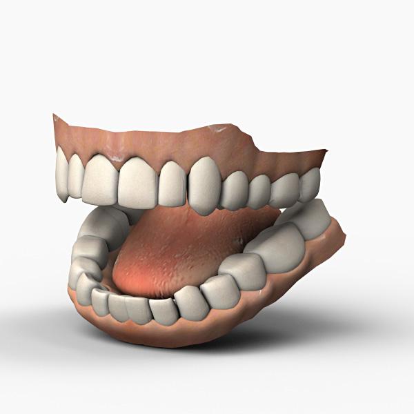 teeth anatomy max