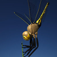 3d dragonfly fly