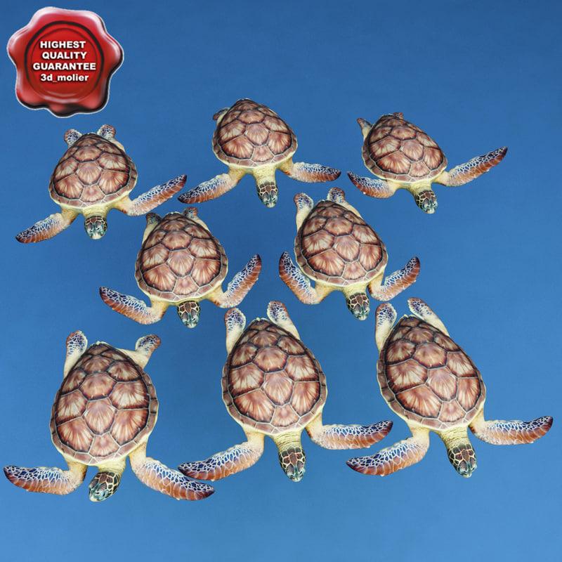 sea turtle chelonia mydas max