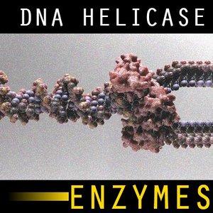 dna helicase 3d model