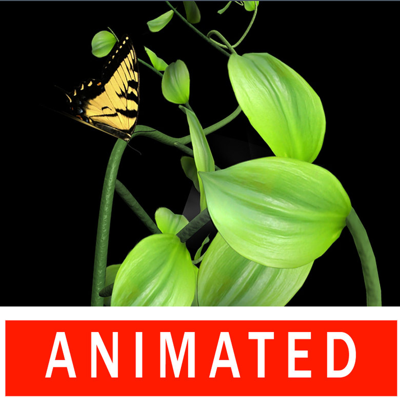 3dsmax butterfly plant animation