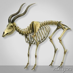goat skeleton 3d model