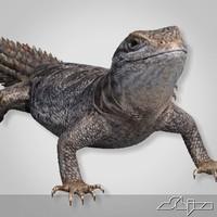 lizard cordylus tropidosternum 3d model