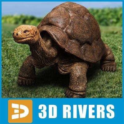 rare turtle 3d model