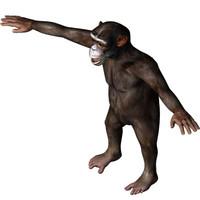 chimp primate 3d model