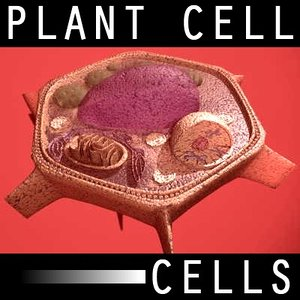 organically plant cell anatomy 3d model