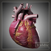 Human heart low poly
