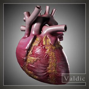 3d model of human heart
