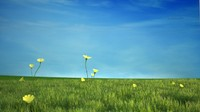 max cg grass field