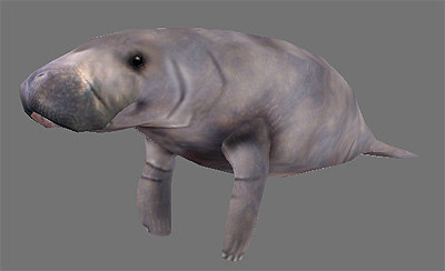 manatee games 3d model