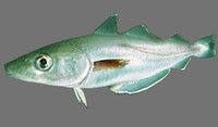 whiting fish 3d blend