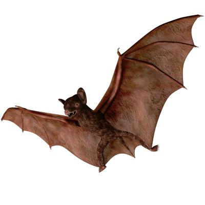 3d max rigged bat