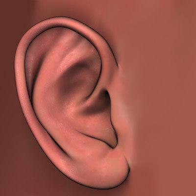 3ds human ear