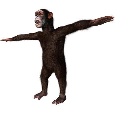 3ds max rigged chimpanzee hair modifier