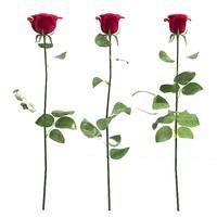 rose flower red 3d model