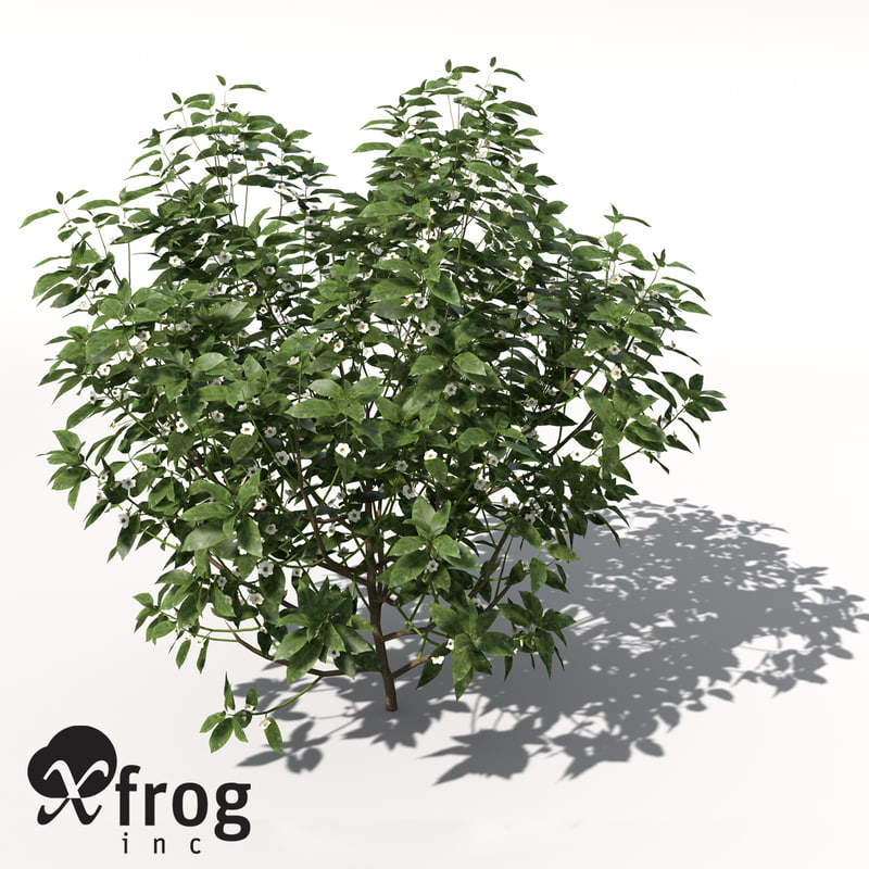 3d 3ds xfrogplants tea plant
