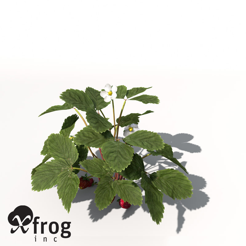 3d xfrogplants strawberry x plant flower model