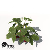 XfrogPlants Strawberry